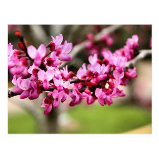 Spring Pink Postcard