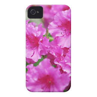 Spring Pink Rhododendron Blooms. iPhone 4 Case-Mate Cases