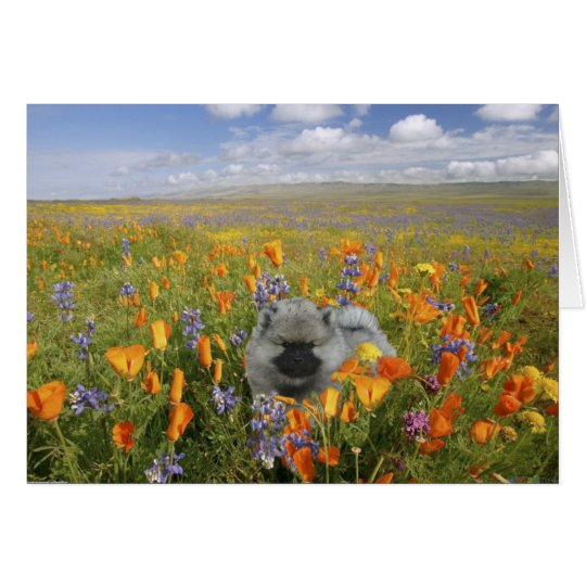 Spring Puppy Notecard