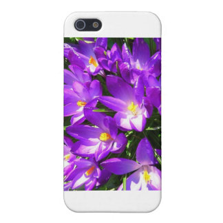 Spring Purple Crocus Flower Covers For iPhone 5