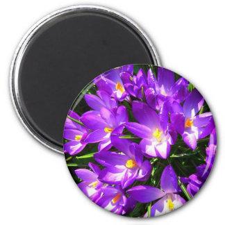Spring Purple Crocus Flower Refrigerator Magnets