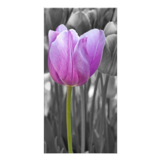 Spring Purple Tulip on Black and White Personalised Photo Card