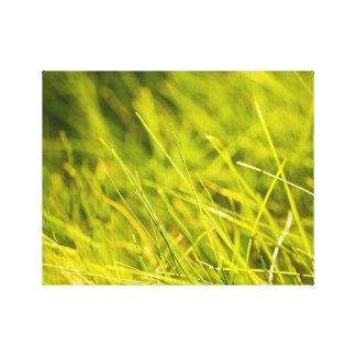 Spring relaxing grass stretched canvas prints