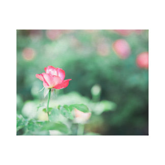 Spring Rose Stretched Canvas Prints