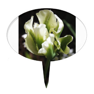 Spring Showers Tulip Garden Botanical Photography Cake Picks