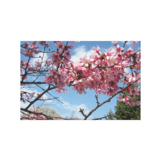 Spring Sky With Pink Blossoms Stretched Canvas Print
