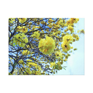 Spring time 2 gallery wrapped canvas