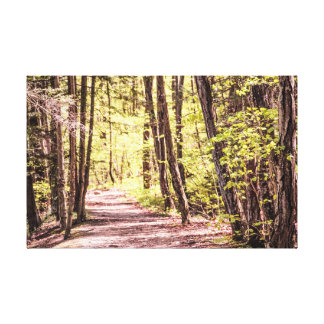 Spring Time Stretched Canvas Prints