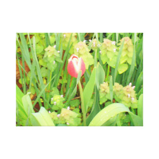 Spring Time Collection 6 Canvas Canvas Prints