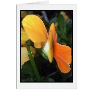 Spring Time Flower Greeting Card