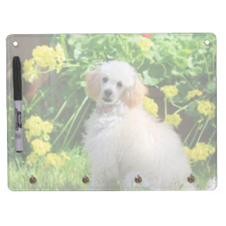 Spring toy poodle puppy dry erase board
