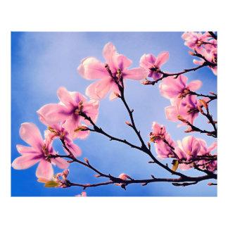 Spring Tree Blossoms Photo Print