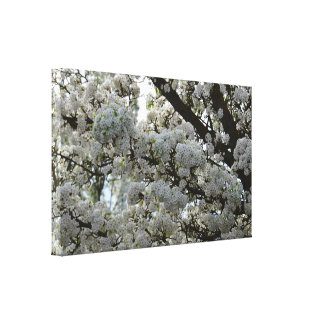 Spring Tree Stretched Canvas Print