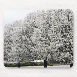 spring trees mouse pad