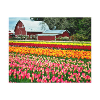 Spring Tulip Fields Stretched Canvas Print