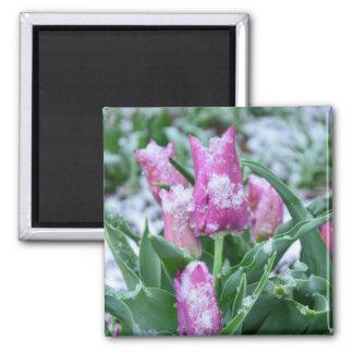 Spring Tulip Magnet