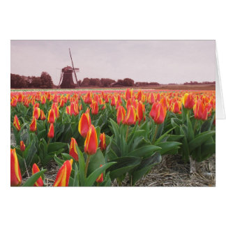 Spring Tulip Time Flower Field and Windmill Greeting Card