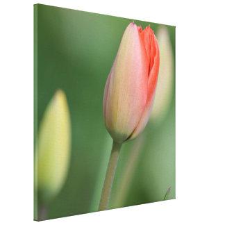 Spring Tulips Gallery Wrap Canvas