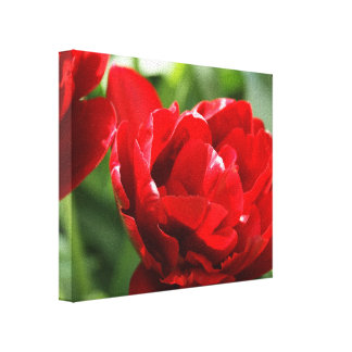 Spring Tulips Gallery Wrapped Canvas