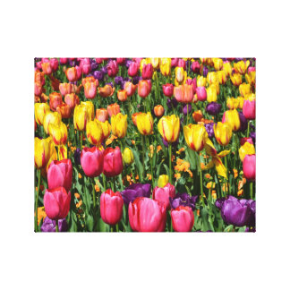 Spring Tulips Canvas Stretched Canvas Prints