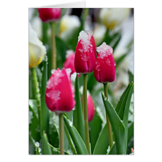 Spring Tulips in the Snow Greeting Card