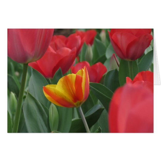 Spring Tulips Note Card