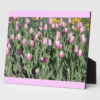 spring tulips photo plaques
