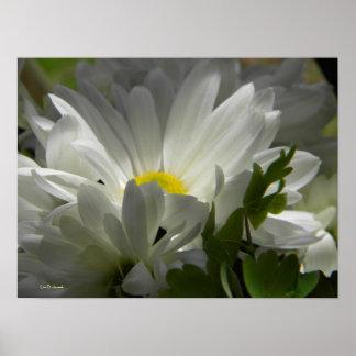 Spring white 1 poster