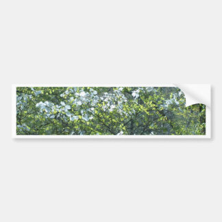 spring white dogwood flowers bumper sticker