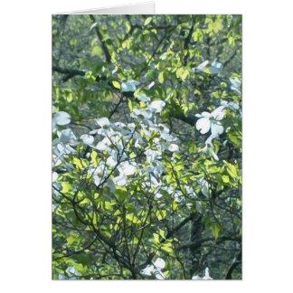 spring white dogwood flowers greeting card