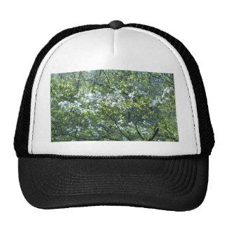 spring white dogwood flowers hat