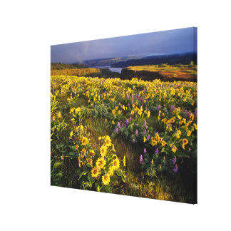 Spring wildflowers in abundance at the Tom Gallery Wrap Canvas