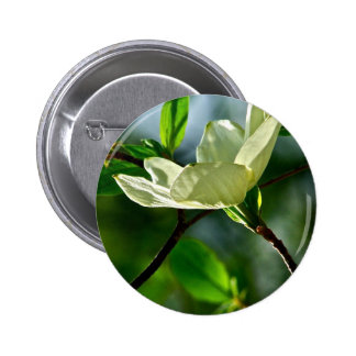 SPRING WITH DOGWOOD FLOWER IN SPOTLIGHT PINBACK BUTTONS