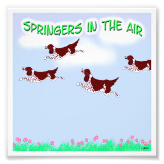 Springers in the Air Photo