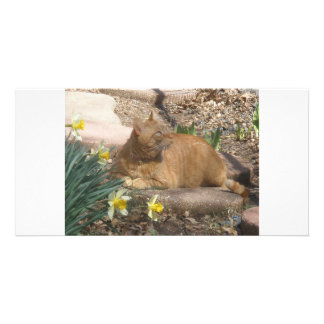 Springtime cat photo card