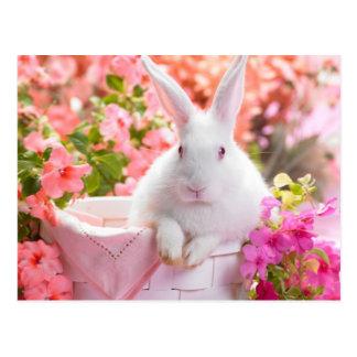 Springtime Hare Postcard