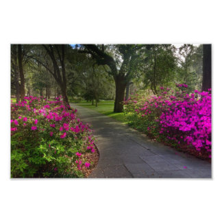Springtime In Forsyth Park, Savannah Photograph