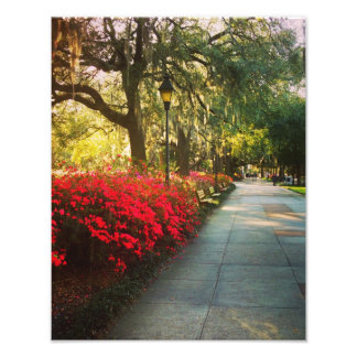 Springtime In Savannah Photo Print
