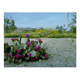Springtime in the Sonoran Desert Pink flowers Postcard