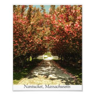 Springtime On Nantucket Photo Print
