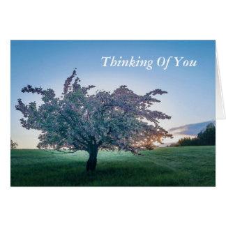 Springtime Sunrise, Flowered Tree at Dawn - Blank Card
