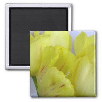Springtime Tulips Magnet