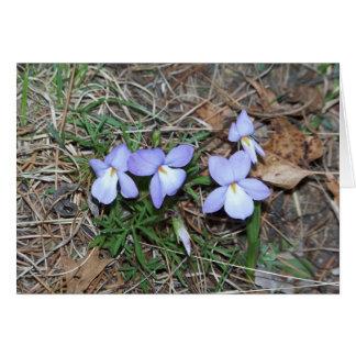 Springtime Violets Greeting Card