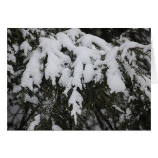 Spruce Card