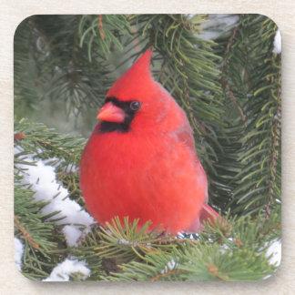 Spruce cardinal beverage coaster