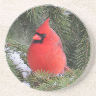 Spruce cardinal drink coasters