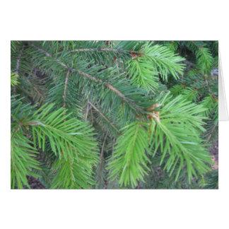 Spruce in spring card