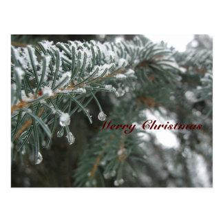 Spruce Needles in Winter Postcard