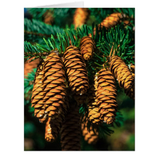 Spruce Tree Cones Card