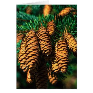 Spruce Tree Cones Card